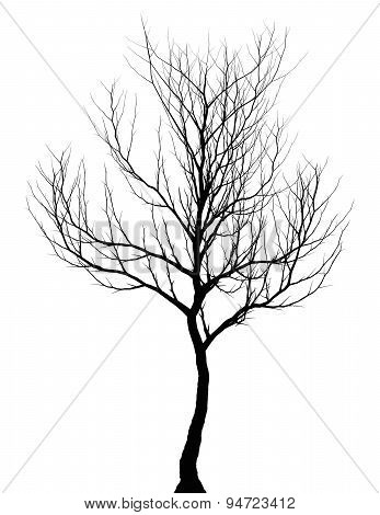Tree Simple Dark Silhouette Isolated On White Background