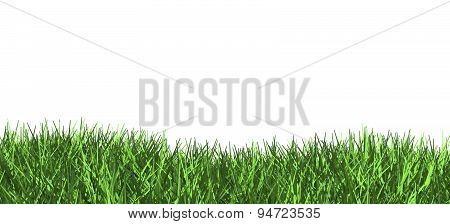 3D Green Grass Illustration Isolated