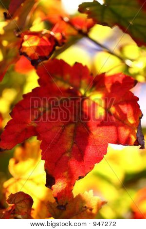 Fall Leaves 7