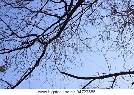 Closeup Of Leafless Autumn Tree Against Blue Sky