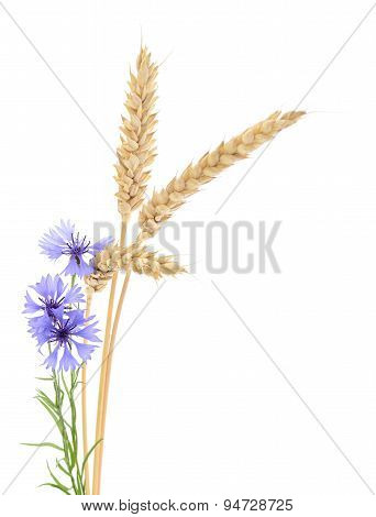 Wheat And Cornflowers.