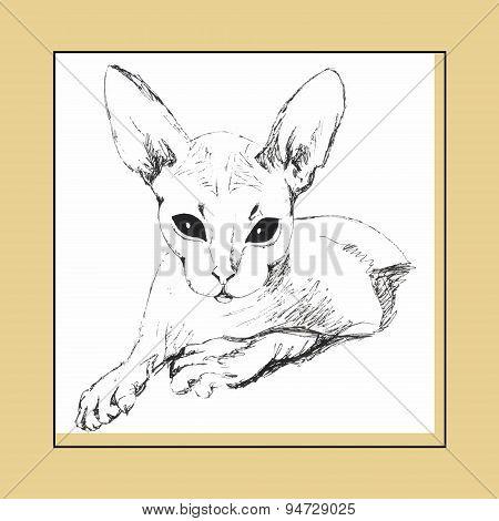 Cat Sphinx Figure Drawing