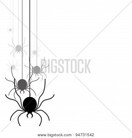 Spiders on the white background