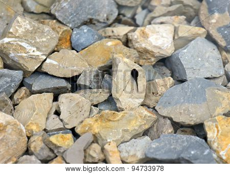 Tadpole In The Pond With Stone In The Mountains