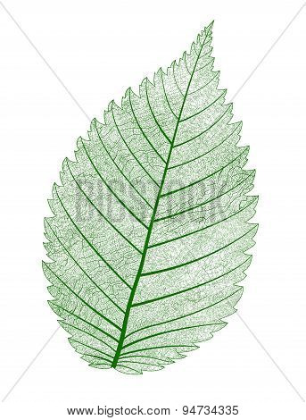Vector leaf isolated.
