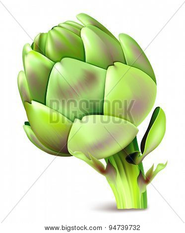 Artichoke. Vector illustration.