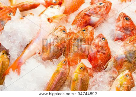 Red snapper fish in wet market