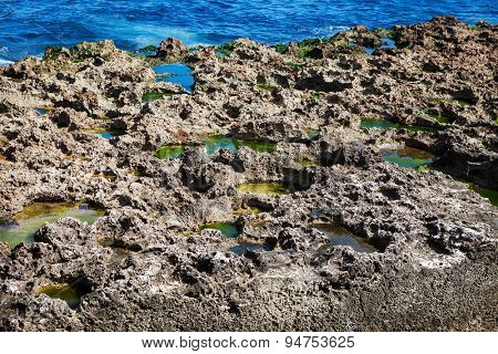 corals on the ocean shore on a sunny day