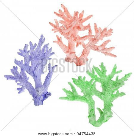 set of color corals isolated on white background