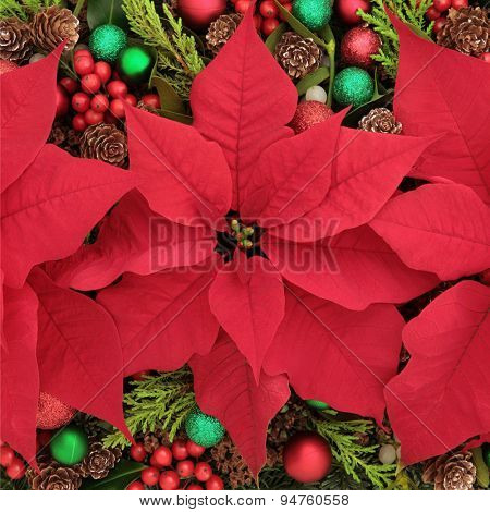 Poinsettia flower  display forming an abstract background..