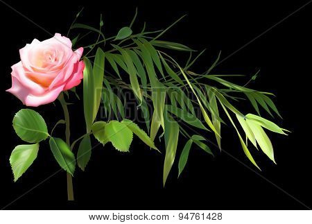 illustration with green bamboo branch and rose flower isolated on black background