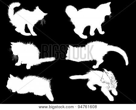 illustration with cat collection isolated on black