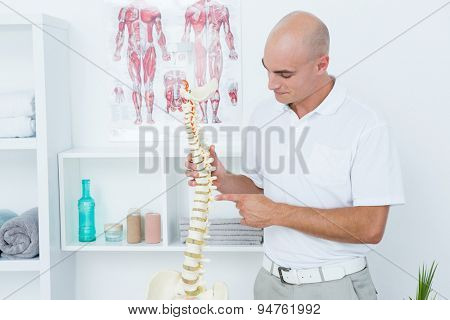Doctor holding an anatomical spine in medical office