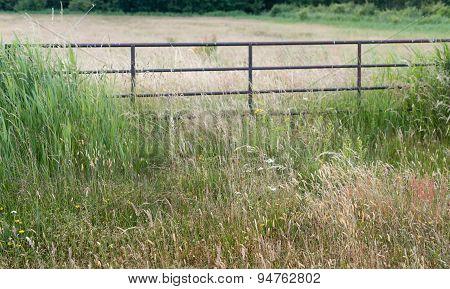 Rusty Iron Gate In A Rural Area