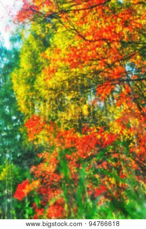 Abstract blurred autumn leaves background