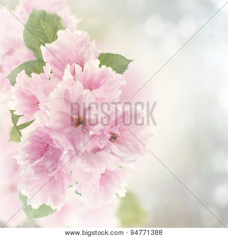 Digital Painting Of Cherry Blossom