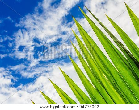 Green Palm Leaf With Blue Sky