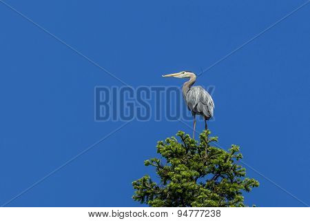 Perched Heron And Blue Sky.