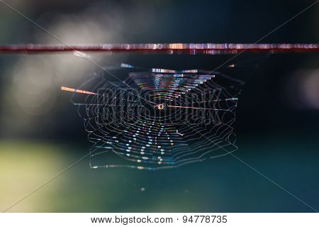 Rainbow on a spiderweb