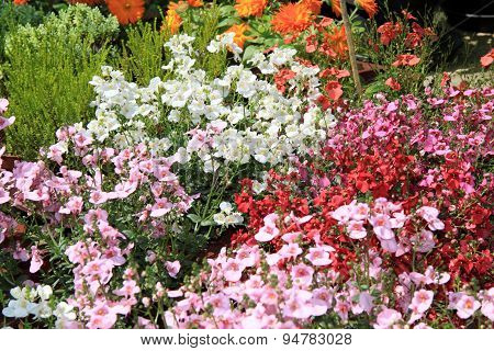 Colorful border flowers in the garden