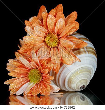 Flowers and shells