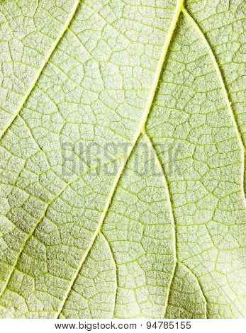 Closeup view of texture of leave
