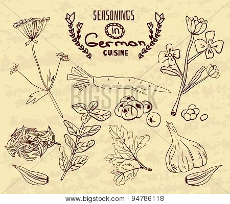 Spices in German cuisine. The herbs set in retro style
