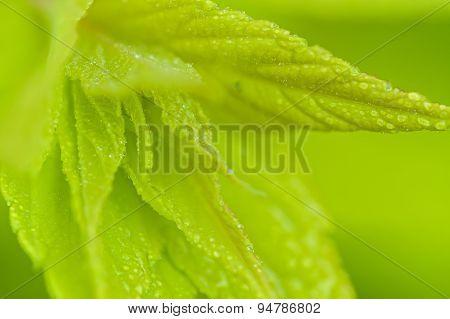 Blurred Green Leaves