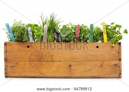 variety of herbs with name tags planted into vintage banana box, isolated on white