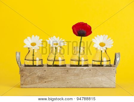 Wooden tray with small bottles containing three marguerite daisy and one red poppy flowers, yellow background