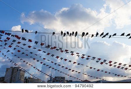 Birds Hanging On A Wire