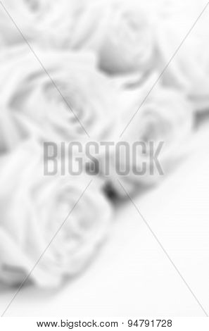 Beautiful White Roses Close-up In Blur Style As Wedding Background. Soft Focus. In Black And White.