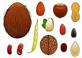 stock photo of hazelnut  - Coconut - JPG