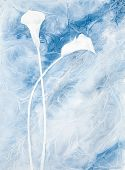 picture of calla  - watercolor painting of two calla lilies in blue color scheme clingfilm technique - JPG