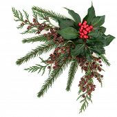 image of ivy  - Christmas flora with holly and red berries - JPG