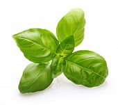 foto of basil leaves  - Basil leaves spice closeup isolated on white background - JPG