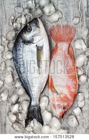 Couple of raw fresh dorada and red tilapia fish on ice. Culinary seafood background. Top view still life