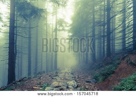 Fog in the haunted green forest in summer - retro style
