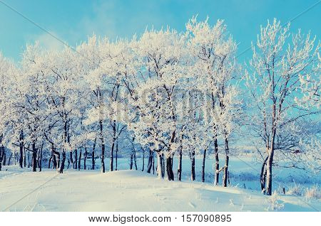Winter landscape - winter beautiful nature with sunshine over winter forest. Evening winter landscape of the winter forest -winter scene with Christmas and New Year mood. Winter colorful background