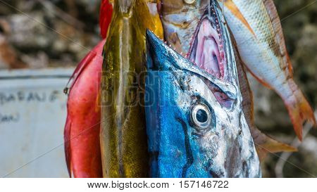 Fresh Fish to buy on Painemo Island, Raja Ampat, West Papua, Indonesia.