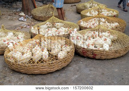 KOLKATA, INDIA - FEBRUARY 11: Live chickens for sale on the market in Kolkata, India on February 11, 2016.
