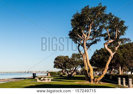 Coral trees and picnic tables at Chula Vista Bayfront Park in San Diego, California.
