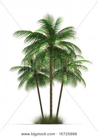 isolated palm trees. Symbol of rest.