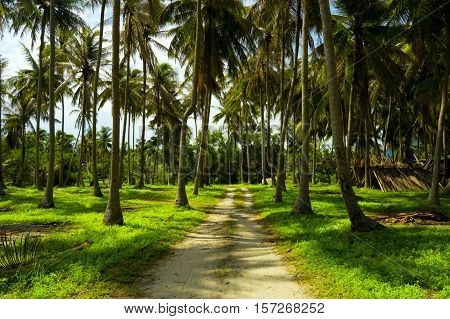 Beautiful tropical island with palmtrees. Scenic landscape.