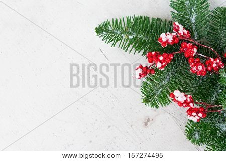 red and white christmas - twig with red berries and gree evergreen tree twig with copy space