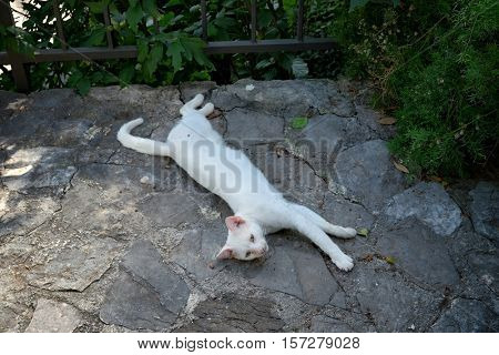 white cat lying on the ground