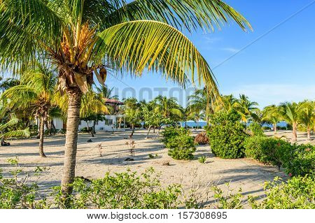 Coconut palms by house on Caribbean beach in Belize, Central America