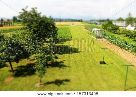 Green summer open garden behind house - miniature effect - grass, field, trees, harvesting