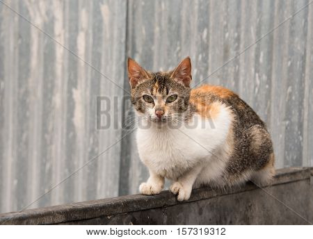 Alley cat sat on the edge of a large rubbish bin