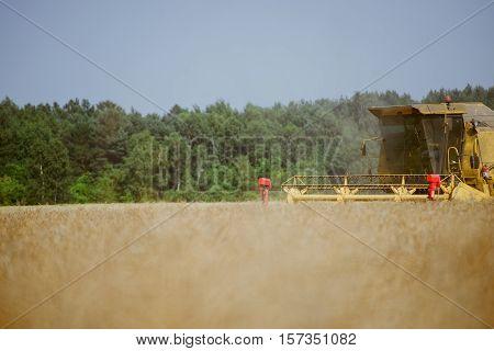 Combine Harvesting The Rape Field